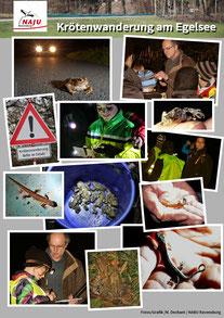 Poster: Maximilian Dechant - NAJU-Veranstaltung Krötenwanderung am Egelsee