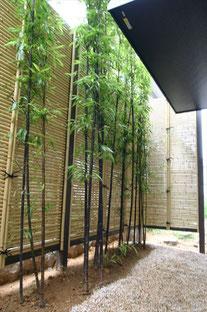 浴室から眺める竹