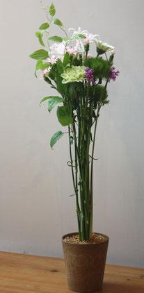 Hana Ami Blumenschule Momigara Greengabes