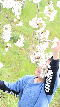 桜を掴もうとする子供の写真フリー素材 Photo free material of a child trying to grab a cherry blossom