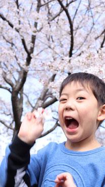 桜でポーズの写真フリー素材 Photo free material of pose with cherry blossoms