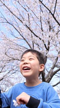 桜と子供の写真フリー素材 Sakura and children photos free material