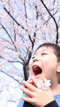 桜に感動する子供の写真フリー素材 Children's photo free material impressed by cherry blossoms