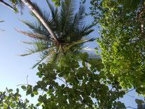 Blick vom Badehandtuch nach oben - alles kokosnussfrei!