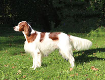 Limelane's Deep Secret Duke - working-dog.com