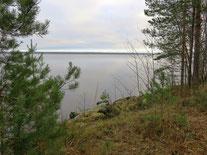 Большой часток у берега озера и соснового леса