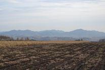 収穫後のタカゾノの畑(2011-12月)
