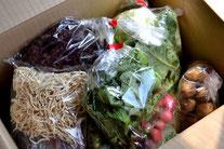 オーガニック野菜販売 無農薬野菜販売 野菜セット