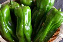 無農薬野菜 ピーマン スリーエフ農法