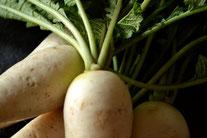 無農薬野菜 ダイコン スリーエフ農法