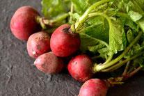 無農薬野菜  スリーエフ農法 ラディッシュ
