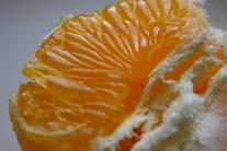 オーガニック野菜販売 無農薬野菜販売 柑橘 いよかん