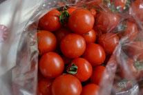 オーガニック野菜販売 無農薬野菜販売 ミニトマト