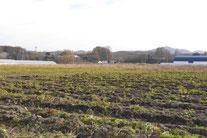 収穫後の大根畑(2011-12月)