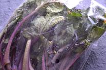 瀬川さんの紅芯菜(春)