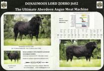 Angus Tannhof DM Lord Zorro