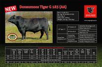 Angus Tannhof Donaumoos Tiger