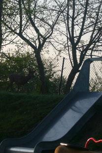 Besuch von einem Reh im Garten