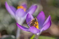Frühling. Foto: Silke Lorenz