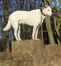 Bild: Joey auf der Mauer; Smeura Rumänien, Tierhilfe Hoffnung, Tierheim Bielefeld