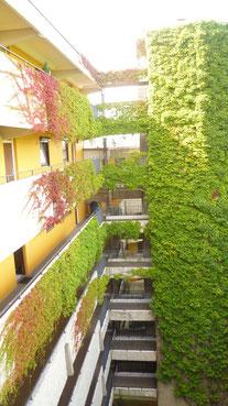 Bild: Terrassenhaus Hannover / Mühlenberg, begrünter Treppenturm