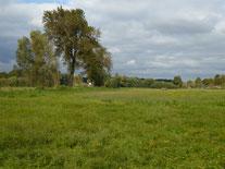 Feuchtwiese mitten in Dornheim, Foto NABU GG