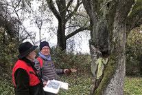 Projekt Streuobstwiesen Baiertal-Schatthausen