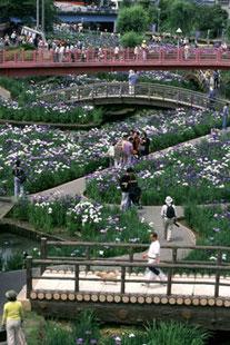 園遊の橋 (半切)