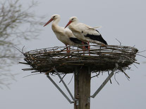 "Teilnehmer*Innen an der Aktion ""Sauberhafte Landschaft"" - Foto: Silke Wagner"