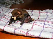 Die Pflegetiere werden mit nahrhaften Insekten gefüttert - eine kosten- und zeitintensive, ehrenamtliche Arbeit. Foto: Wolfgang Kulick