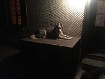 Einsamer Nachtwächter Yukon auf Posten