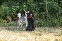 Zwei die sich mögen beim Kuscheln überrascht (Yukon und Arizona)