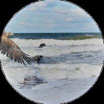 rügen reise #urlaub #reiselandtis #ostsee #kreuzfahrt #bilderundfilme