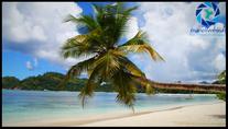 Palm at Seychelles Beach