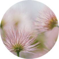 "Bild von <a href=""https://pixabay.com/de/users/susannp4-1777190/?utm_source=link-attribution&amp;utm_medium=referral&amp;utm_campaign=image&amp;utm_content=3021186"">Susann Mielke</a> auf <a href=""https://pixabay.com/de/?utm_source=link-attribution&amp;utm"