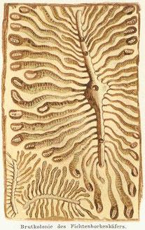 Brutbild des Buchdruckers (aus Meyers Konversations-Lexikon, 4. Aufl. 1888, Bd. 16, S. 352)
