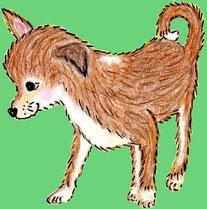 Der Chihuahua Daisy (Buntstiftzeichnung)