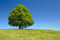 Das richtige Klima schafft Wachstum - insoweit sind Unternehmen wie Bäume