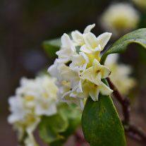 春に白い花が咲く木 種類
