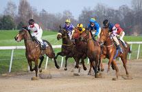 Pferde-Rennen auf Sand