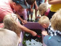 Jens Thesenvitz (li.) versucht aus dem Behälter einen Wasserbewohner zu fangen (Foto: Gudrun Edner)