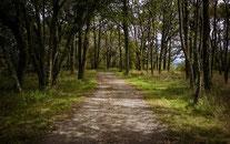 Autour des Bois d'Ustaritz