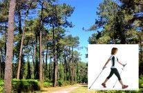 Marche nordique en forêt de CHIBERTA