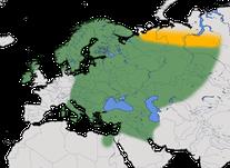Karte zur Verbreitung der Nebelkrähe (Corvus corone)