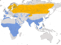 Karte zur Verbreitung des Waldwasserläufers (Tringa ochropus).