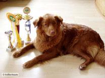 2012 - Bakis Erfolg bei der Welthundeausstellung