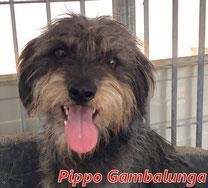 Pippo Gambalungo - geb. 01/2018