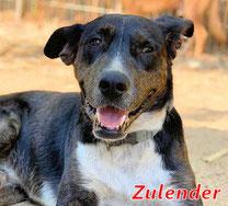 Zulander (m) - Arca Sarda - geb. 10/2018