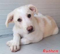 Ruthen - geb. 08/2020
