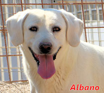 Albano - geb. 06/2016